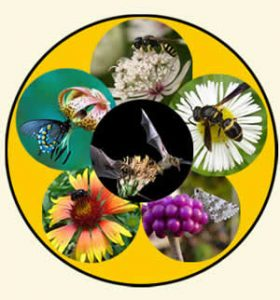 pollinators - animal wheel, courtesy USDA Forest Service website