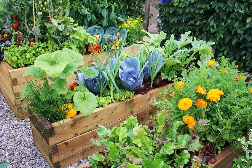Patio Vegetable Garden With Flowers